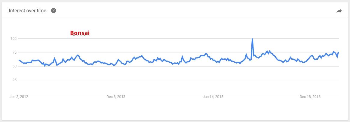 Google Trend for Bonsai