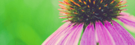 Start an Online Flower Business