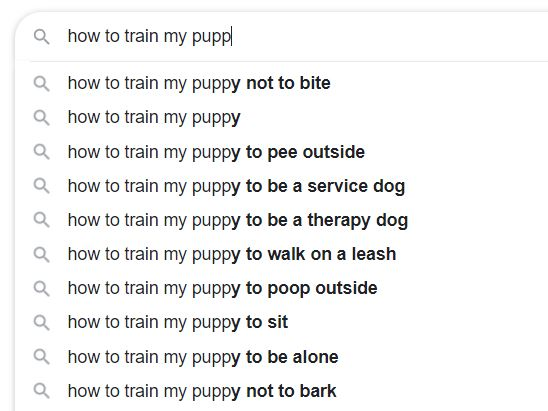 Google Search for How to Train My Puppy